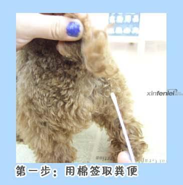 cpv详情使用步骤猫瘟试纸1-哈尔滨大爱宠物用品